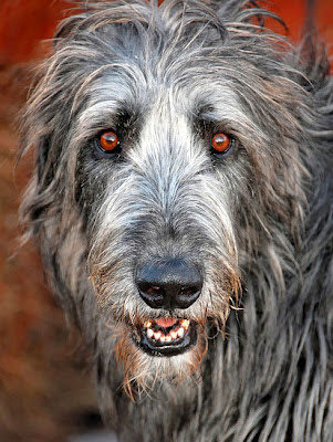 Irish Wolfhound by LesPaulSupreme
