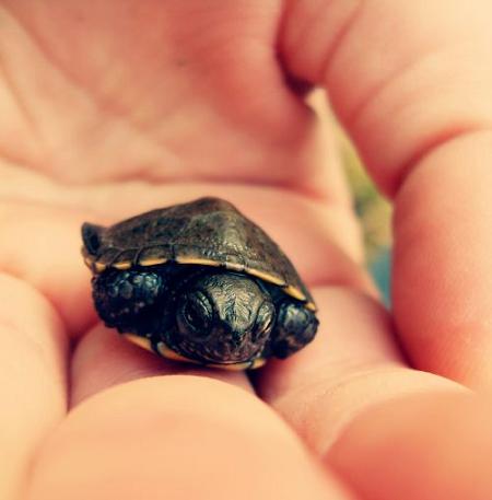 Mơ thấy rất nhiều rùa con của Cẩm Vân