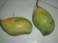 mangga malgova