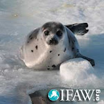 Please Stop the Seal Hunt ...