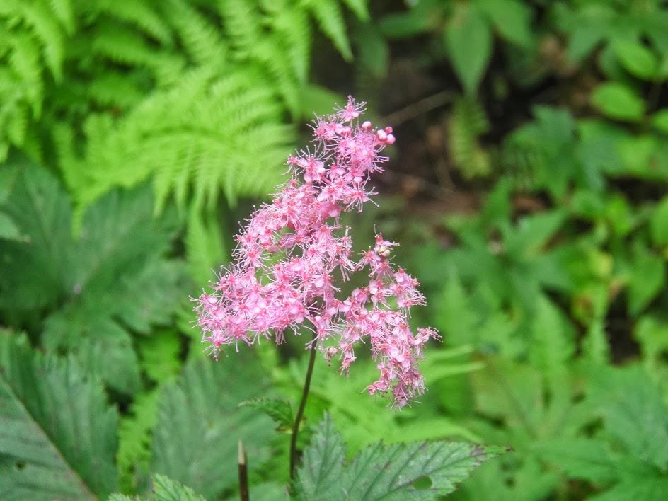 私の近況(田舎暮らしでブログ作成の仕事)ブログSiteの花