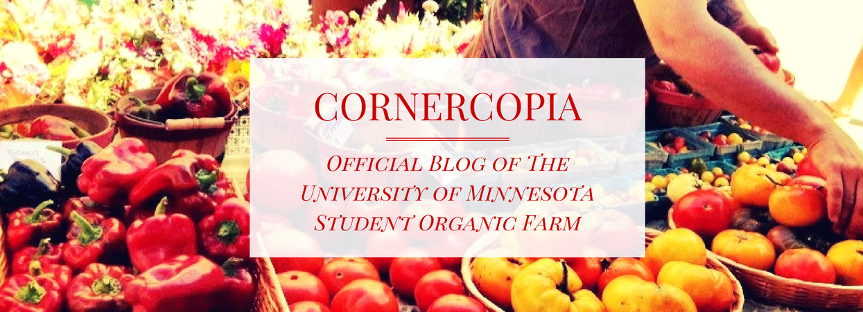 The Cornercopia Blog