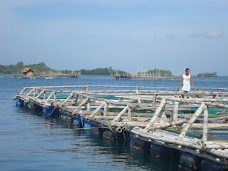 fish cages in Seafdec