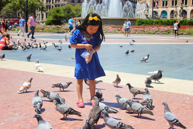 Pigeons| Plaza Catalonia | Barcelona | Chichi Mary Blog