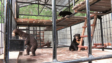 Desi, Hilda and Kevin in the new cage