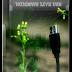 Windows Live USB - Cứu hộ chuyên nghiệp và đơn giản từ USB