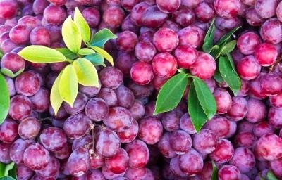 العنب, فوائد العنب الصحية