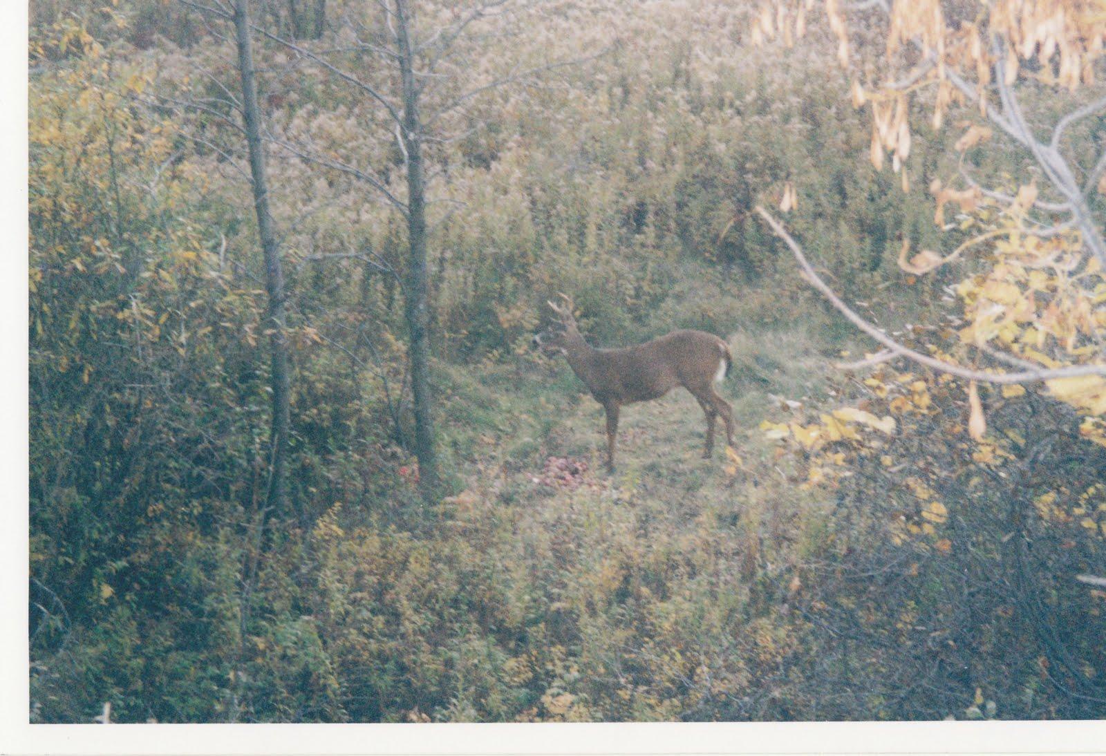 Blog de chasse au chevreuil l 39 arc prix du permis dans for Prix du permis