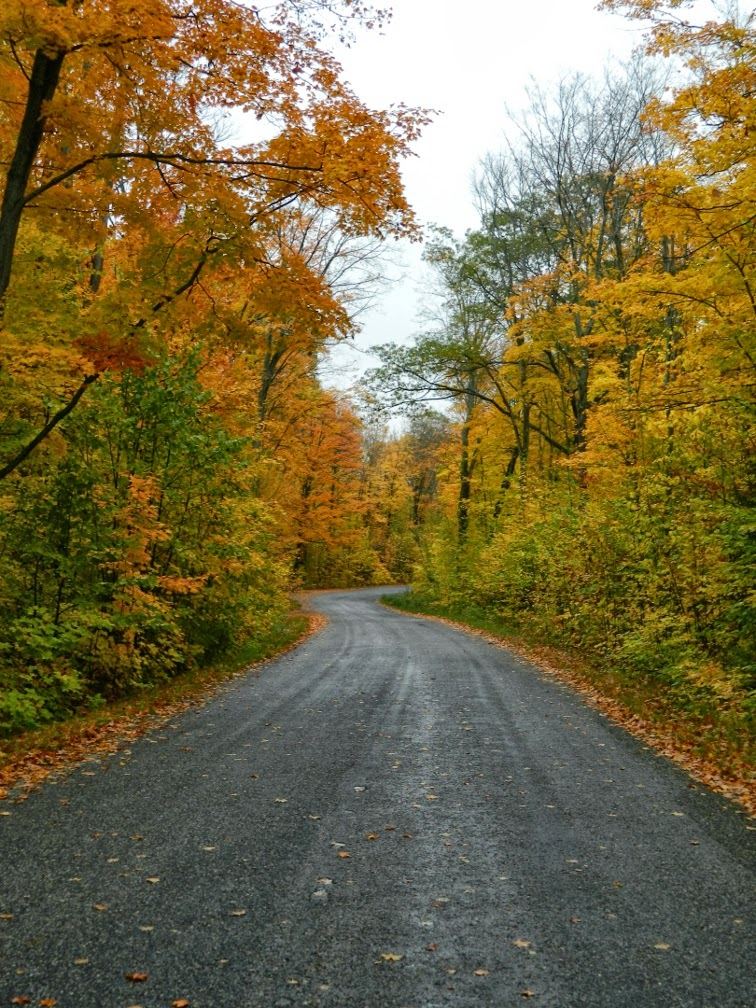 Lake Muskoka fall colours cottage road by garden muses--a Toronto gardening blog