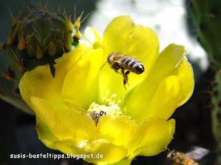 Biene im Anflug susis basteltipps mit stampin up