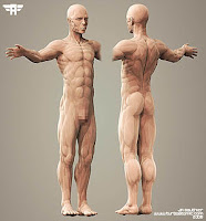 3d Anatomy4
