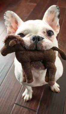 http://cutepuppyanddog.blogspot.com/