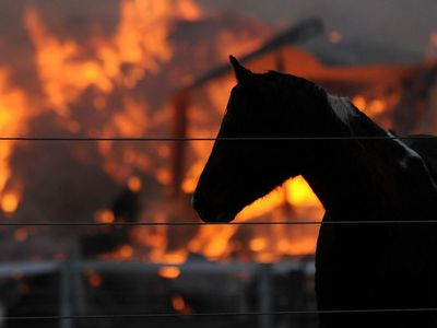 horses and burning barns Macon martin, 16, is being called a hero after his quick thinking saved the lives of 14 clydesdale horses the family home, located about 60 miles east of atlanta, georgia, was struck by lighting in the middle of the night.