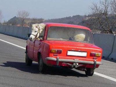smiješne slike konji auto