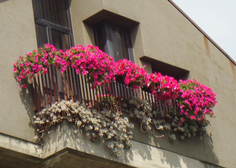 Piante Surfinie : Un piccolo giardino in città luglio