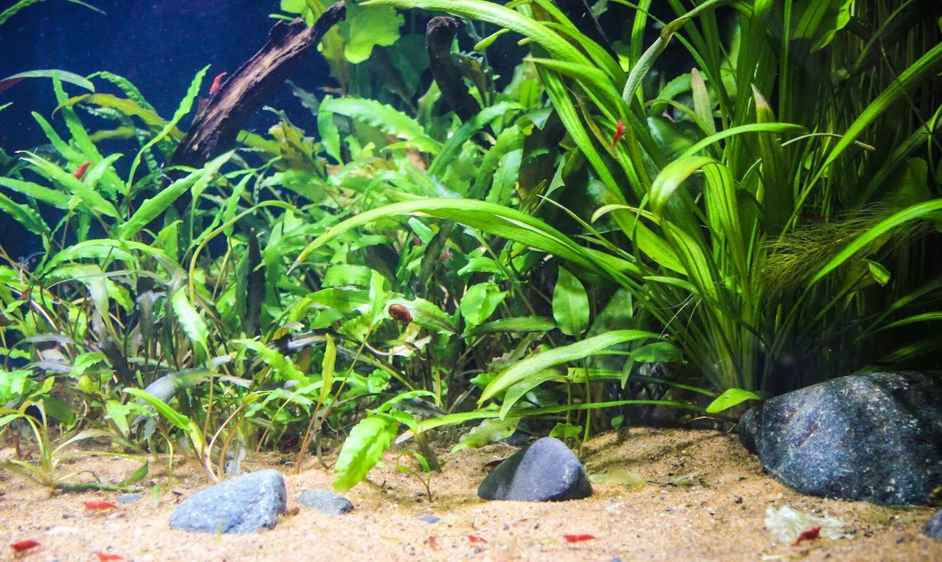 Растительный аквариум для начинающих