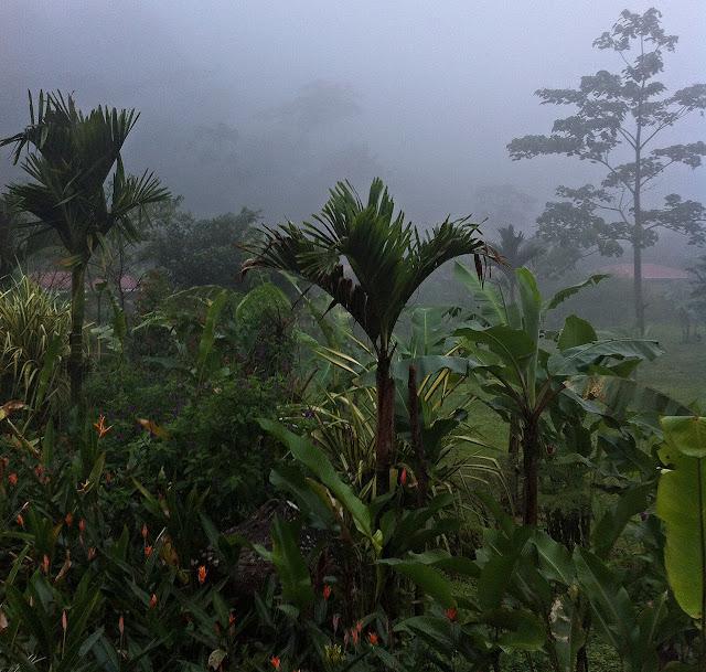 Die Stille des Regenwaldes Costa Rica`s
