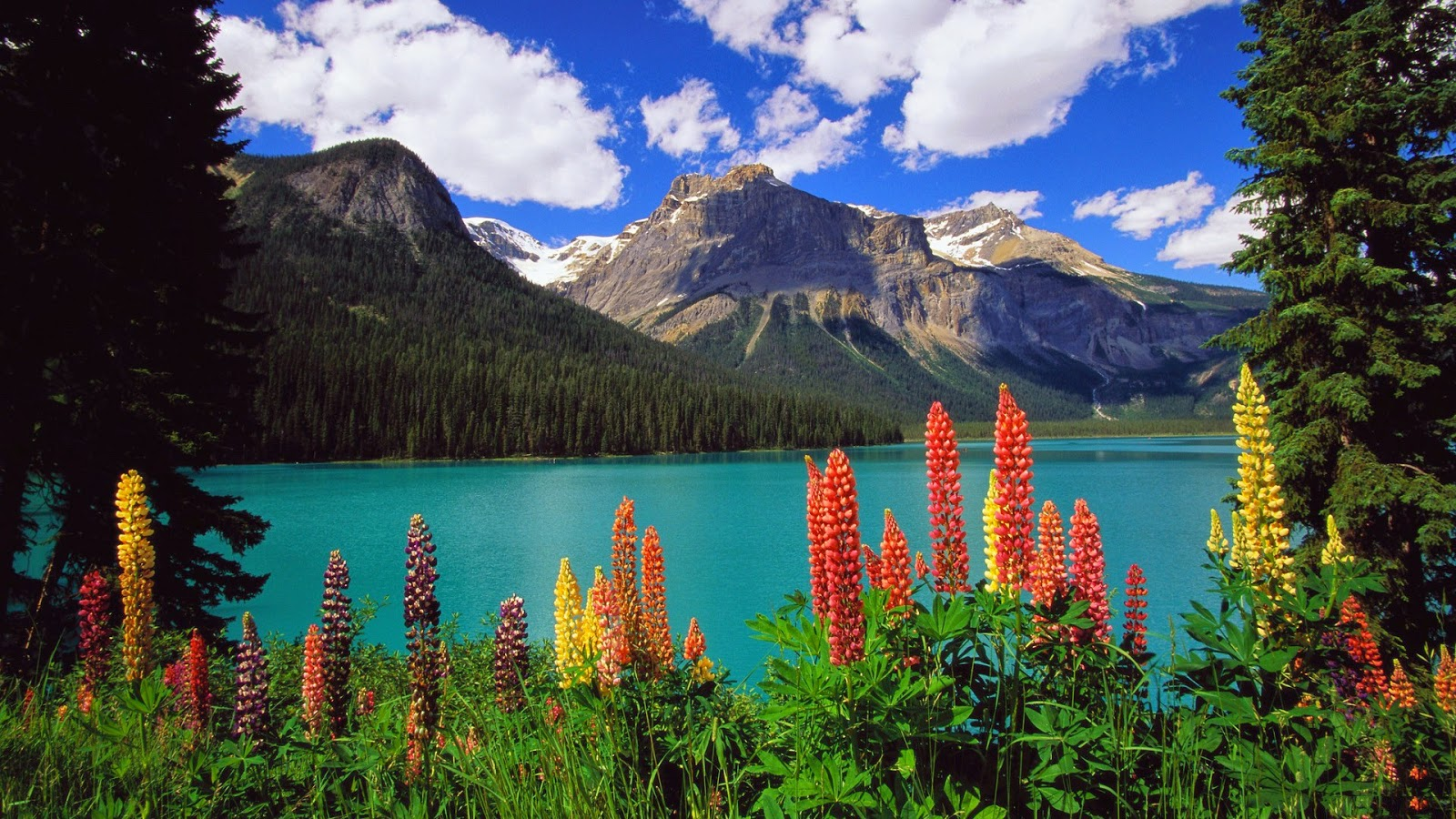 Beautiful Wallpaper Mountain Flower - mountains-clouds-landscapes-nature-trees-colorful-flowers-forest  Perfect Image Reference_85632.jpg
