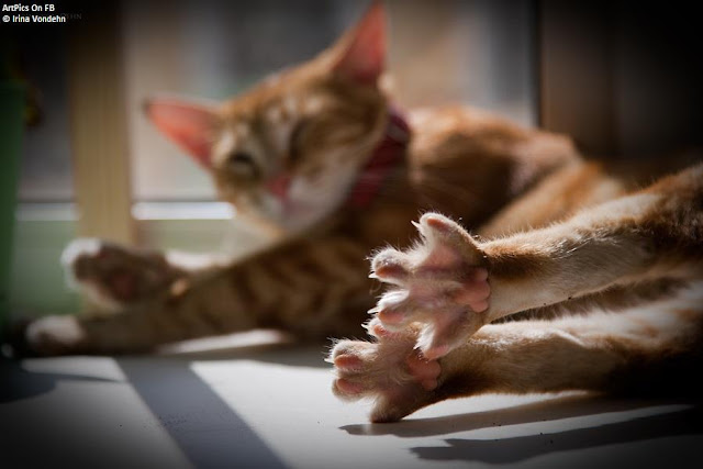 Irina Vondehn : photography : Cat Album