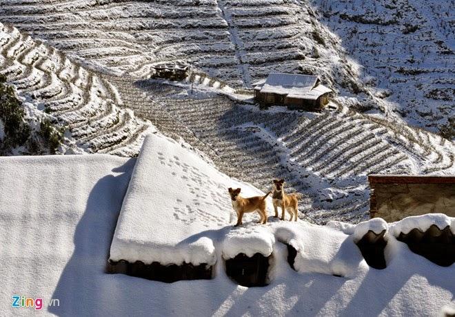 tuyết sapa 2013