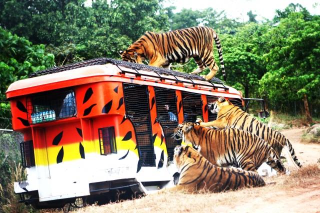 Zoomanity Group- Zoobic Safari, Subic