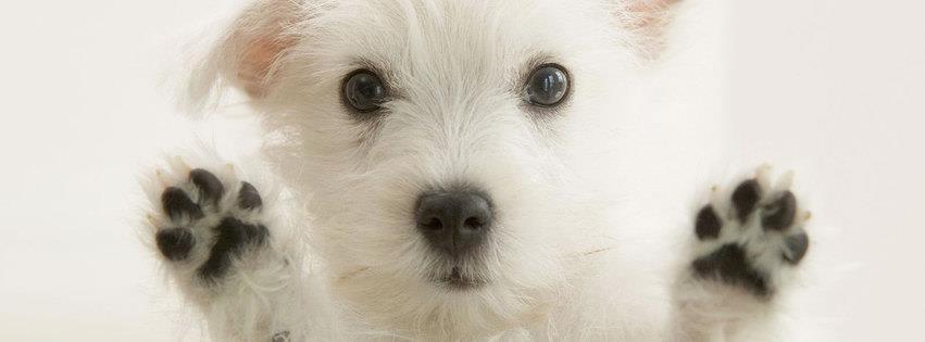 Sevimli beyaz köpek Popi kapak resimleri