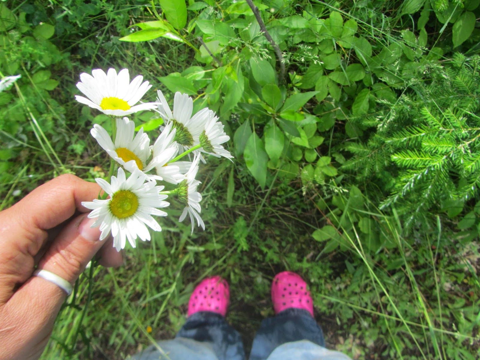 Picking Daisies in North Idaho