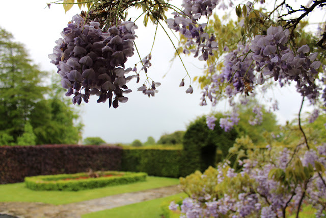 wisteria-branches-kingston-maurward-gardens-todaymyway.com