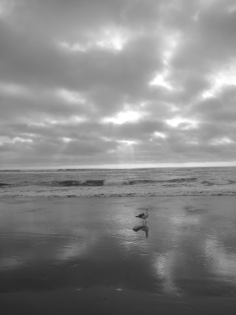 Seagull at Cannon Beach, Oregon.