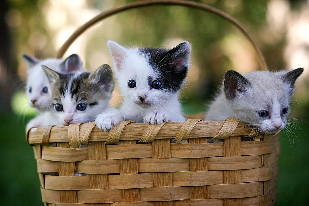 1. Basket-O-sweet by CrackerJackPhotos
