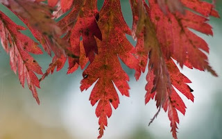 Autumn-Leaves-Wallpapers