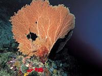 Fotografías de corales en el fondo marino - Corales y Arrecifes
