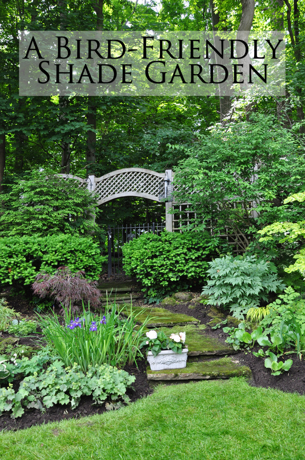 Three dogs in a garden a bird friendly shade garden for Garden design ideas book