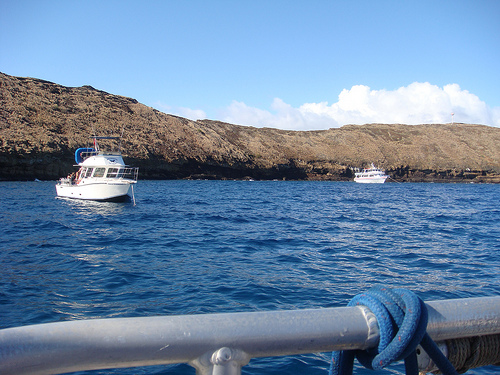 Dubbed among the world s top 10 ing locations molokini is prized