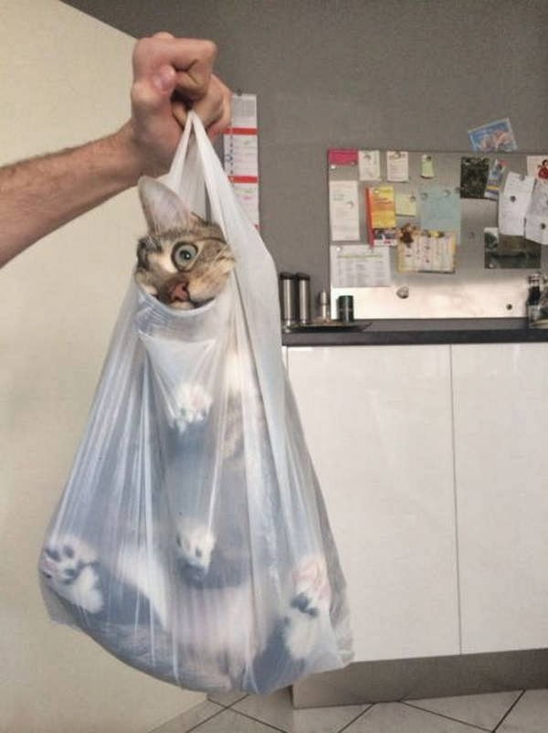 Funny cats - part 94 (40 pics + 10 gifs), cat pictures, cat in plastic bag