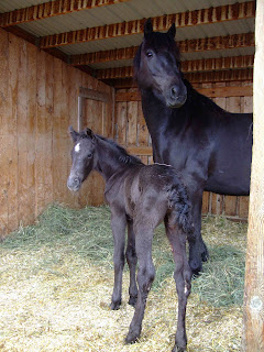 Patricia and her colt