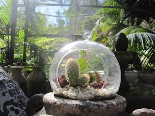 cactus landscape bubble