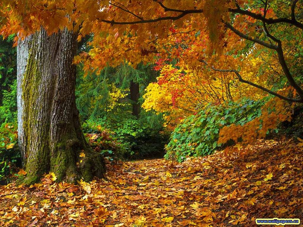 http://4.bp.blogspot.com/-_586WiP5u9I/UHHaIKaksoI/AAAAAAAAAlM/k55q-jg3p5I/s1600/fall-of-autumn-leaves-wallpaper.jpg