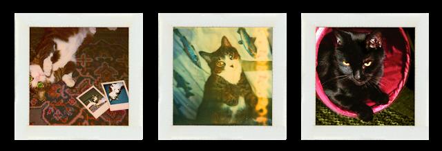 toonzes duff Mr hershal kitty