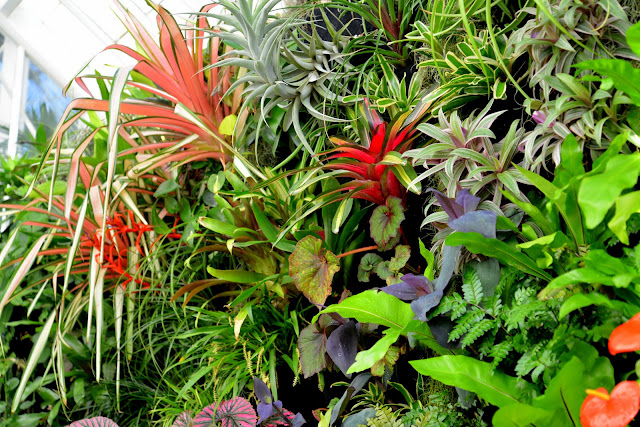 Plants on walls vertical garden systems conservatory of for Flower wall garden