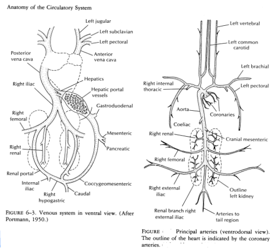 poultry management   anatomy and physiology of the chicken