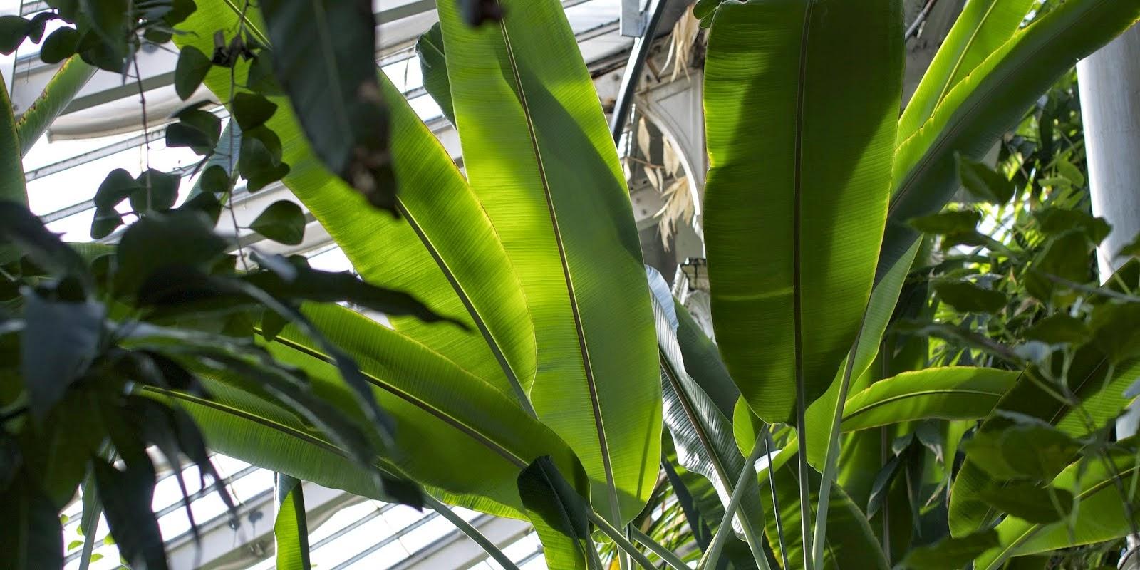 Botanisk Have, Palmehuset