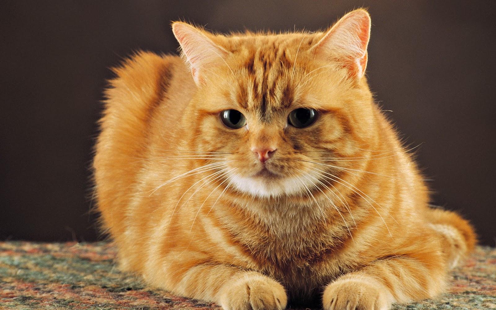Imagenes de gatos traviesos - Fotos Bonitas de Amor
