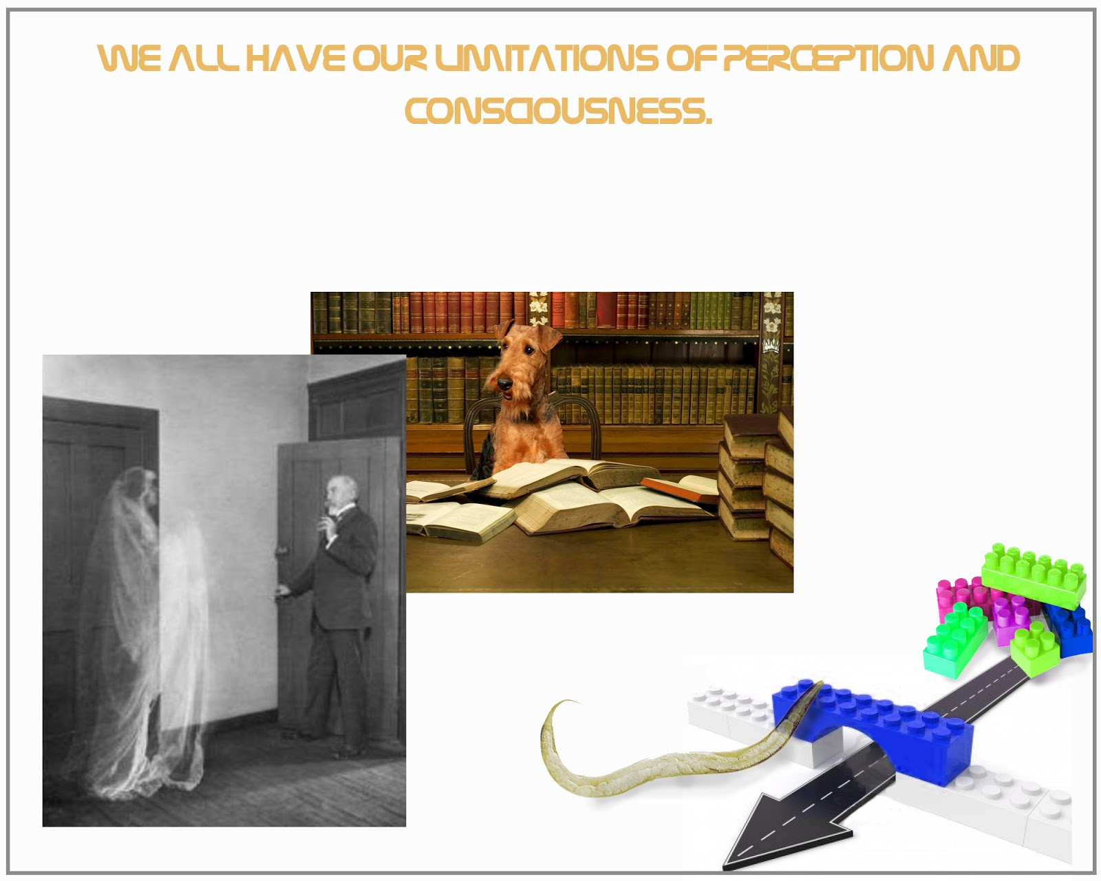 limitations and perception Perception: perception, in humans, the process whereby sensory stimulation is translated into organized experience that experience, or percept, is the joint product of the stimulation and of the process itself relations found between various types of stimulation (eg, light waves and sound waves) and their.