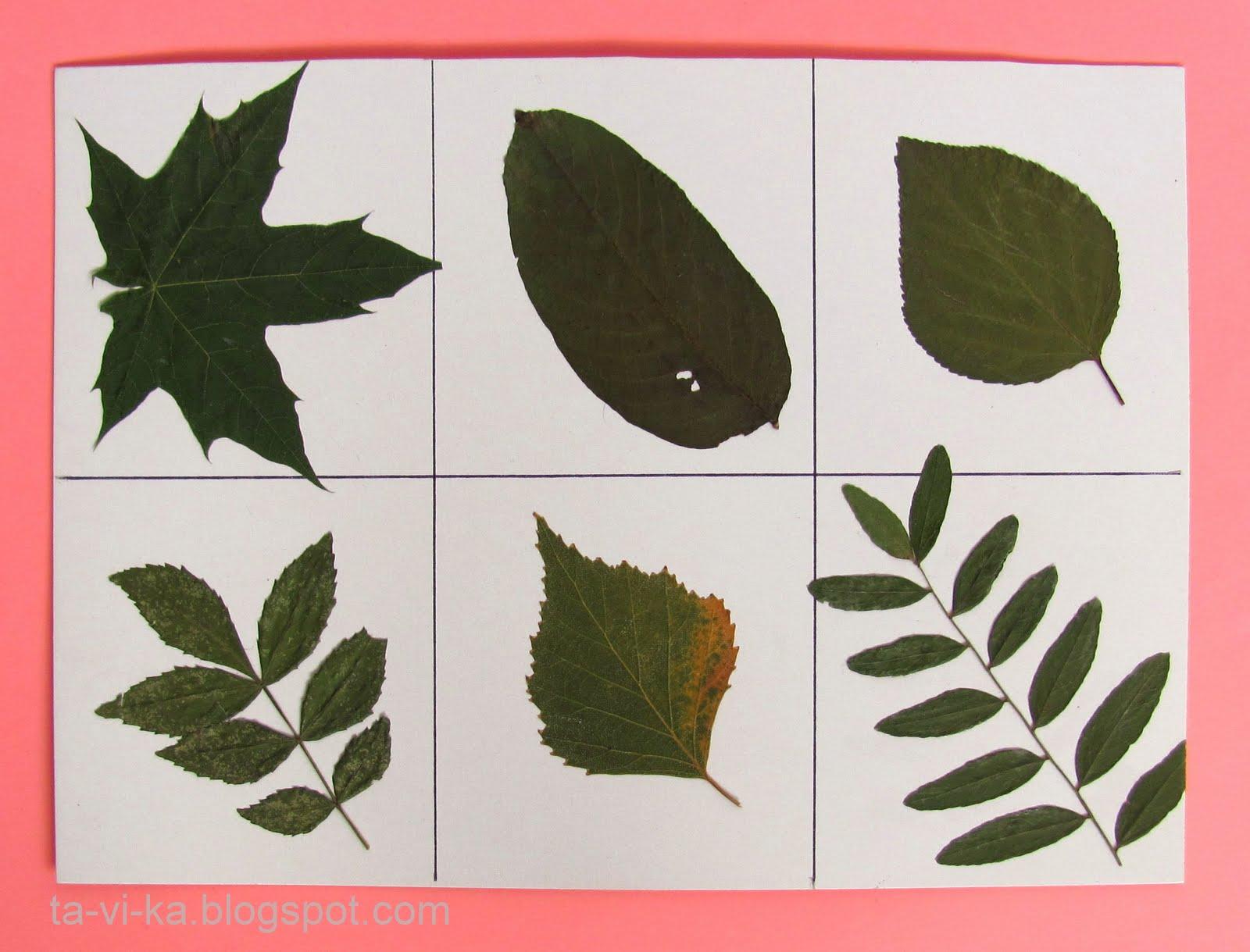 картинки листиков деревьев