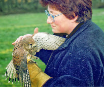 Le fil ténu qui lie le faucon à l'humain...