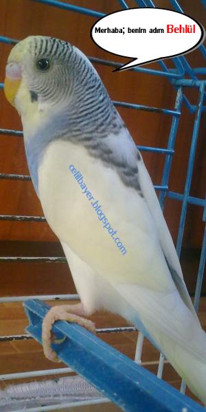 muhahbbet kuşum behlül