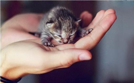 Уход за новорождёнными котятами