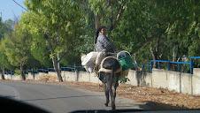 Une paysanne sur son bourricot