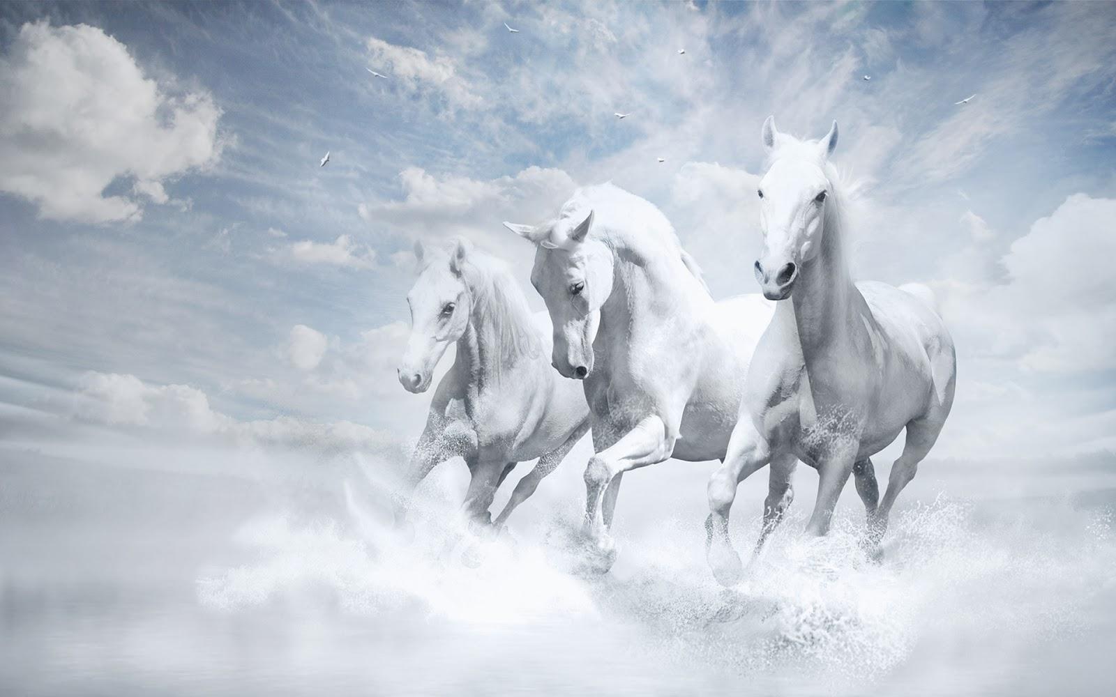 "<img src=""http://4.bp.blogspot.com/-_87HHYWwatg/UuFi4o_z0fI/AAAAAAAAJ_g/iuMwxOYk6xU/s1600/white-horse-wallpaper.jpg"" alt=""white horse wallpaper"" />"